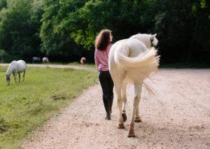 Burley Horse photography