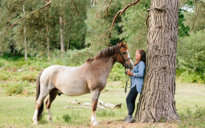Competition winner – Celtic Equine Vets – Hampshire