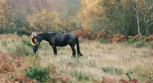 Hampshire equine photographer