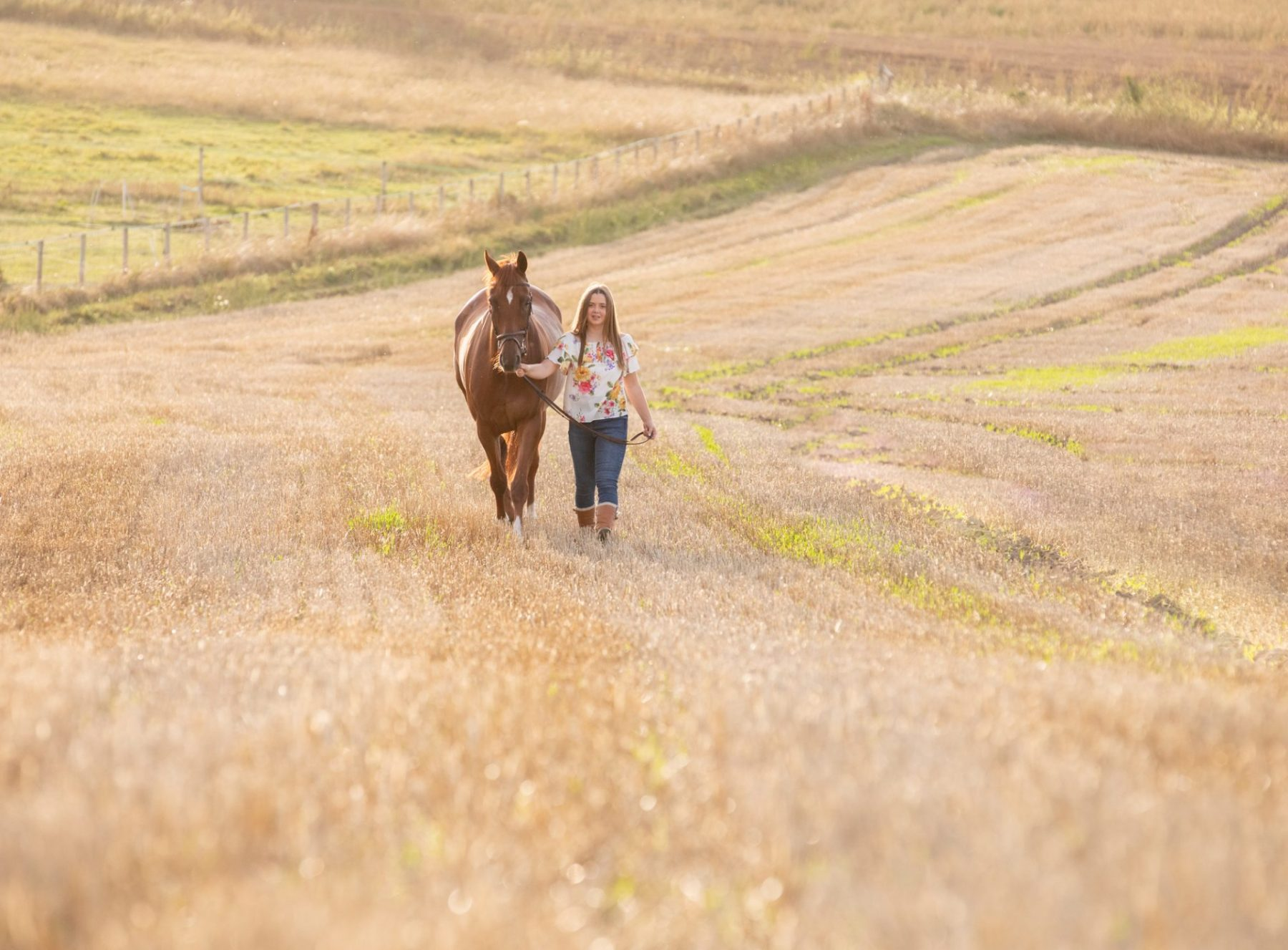 wiltshire horse photoshoots