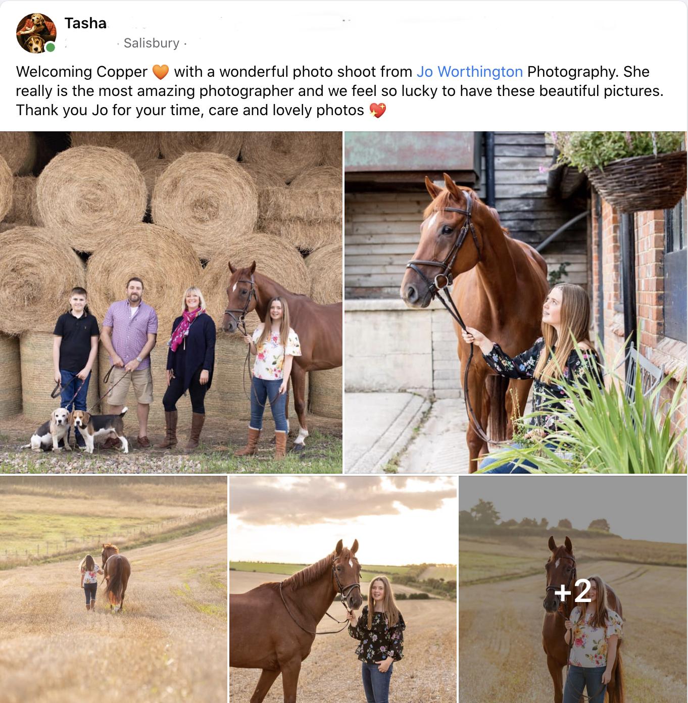 equine testimonial